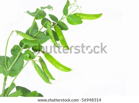 peas isoladed on white - stock photo