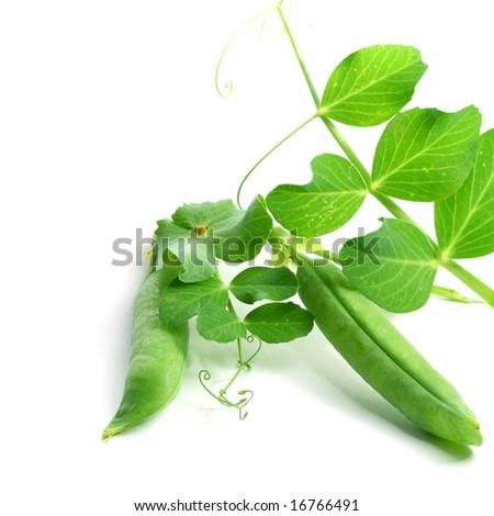 peas isolated on white background macro close up - stock photo