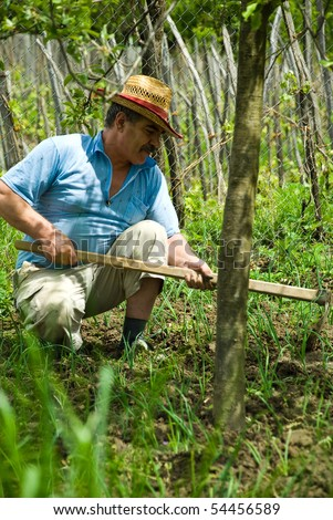 Peasant bent stay and work hard  his ground with spring onion  in the shade of a tree - stock photo