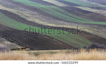 Peasant in wooden cart pulled by a horse on a country road near plowed fields - stock photo