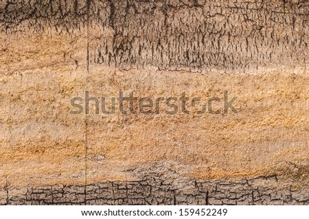 peat bog earth cross section texture - stock photo