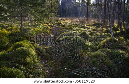 peat bog in the national park Sumava Europe - stock photo