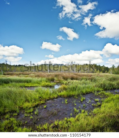 peat bog  - the national park Sumava Europe - stock photo
