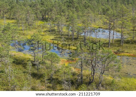 peat bogs in Lahemaa National Park - stock photo