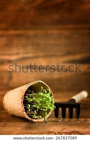 Peat pots and garden tools on wood background - stock photo