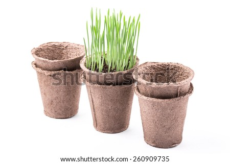 Peat pots with green grass isolated on white background  - stock photo