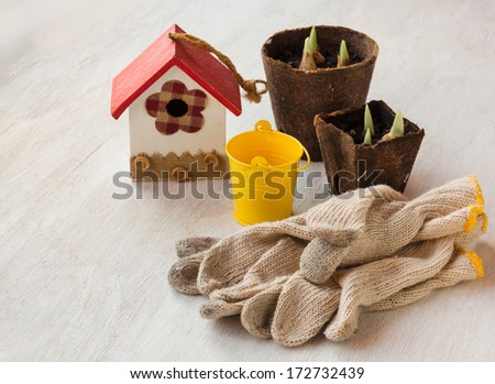 Peat pots with sprouts bulbous irises flowers and garden work gloves on the table - stock photo
