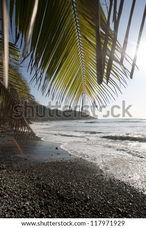 Pebble sandy beach looking over the shining ocean through palms fronds - stock photo