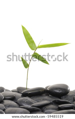 Pebble with bamboo leaf - stock photo