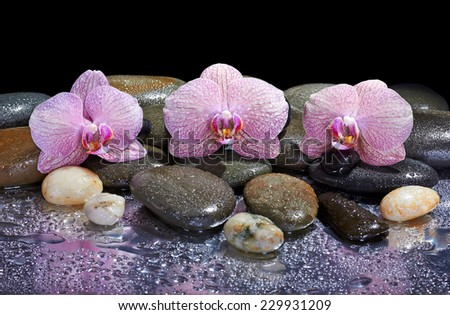 pebbles and pink orchids on wet background  - stock photo