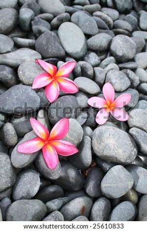 Pebbles background against Plumeria/Frangipani flowers - stock photo
