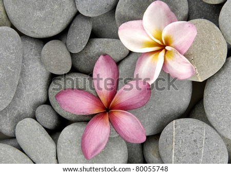 Pebbles background against Plumeria/Frangipani flowers - stock photo