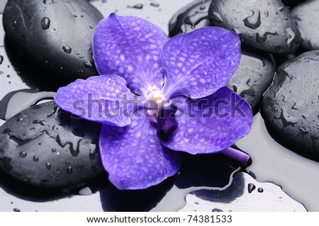 pebbles with beautiful blue orchid - stock photo