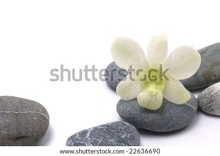 pebbles with beauty orchid