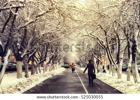 pedestrian pathway tree winter