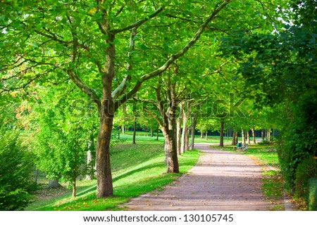 Pedestrian walkway for exercise lined up with beautiful tall trees - stock photo