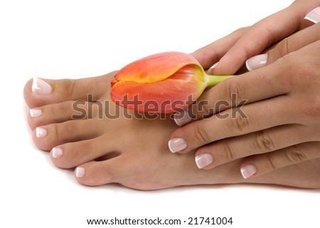 Pedicured foot and manicured hand with an elegant tulip - stock photo
