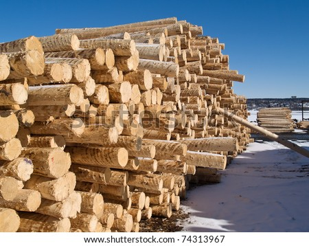 peeled logs in yard of paper factory - stock photo