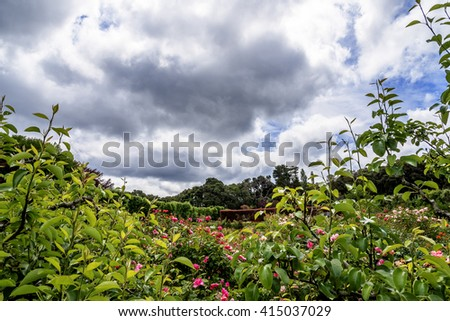 Peering through lush green vegetation & flowers, you get a glimpse of a secret English garden, with manicured hedges & meticulously manicured grounds. In the background is white clouds and blue sky.  - stock photo