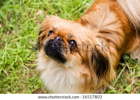 pekines on background of the herb