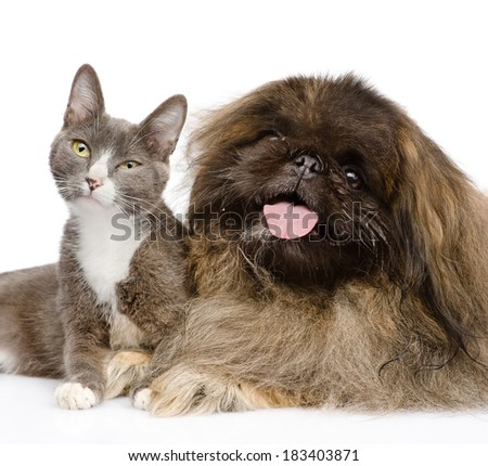 Pekingese dog with cat. isolated on white background