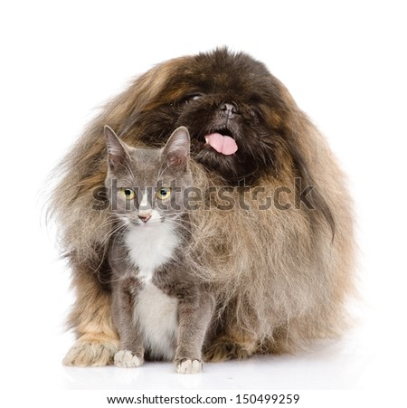 Pekingese hugging cat. isolated on white background