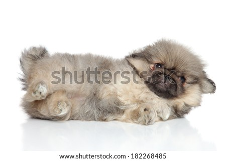 Pekingese puppy (one month) lying on white background