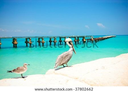 Pelican and seagull - stock photo