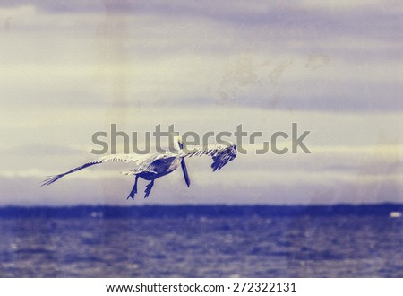 Pelican flying over Gulf of Mexico near Florida. Retro filter effect to portray an old photograph. - stock photo