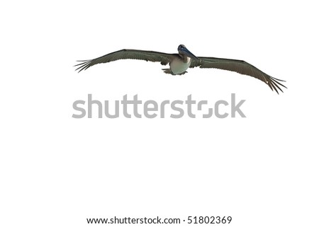 Pelican is flying over  Caribbean sea on sunny day - stock photo