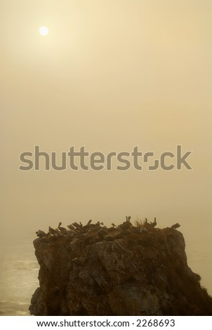 Pelican island off the coast of Pismo Beach California in misty haze of sunset with fog rolling in - stock photo