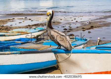 Pelican on a Boat - stock photo