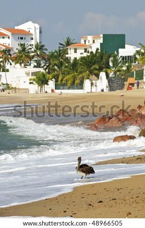 Pelican on Puerto Vallarta beach in Mexico - stock photo