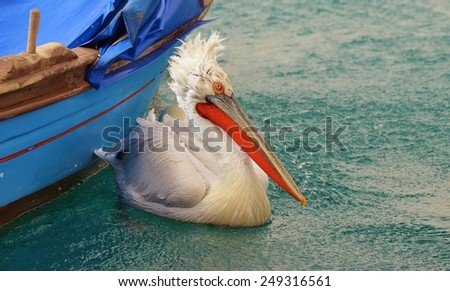 Pelican on Water - stock photo
