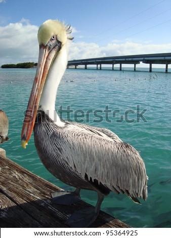Pelican sitting on dock - stock photo