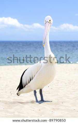 Pelican standing on the white beach - stock photo