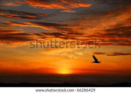 Pelican Sunset, Half Moon Bay California - stock photo