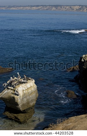 Pelicans along the cliffs of La Jolla, just north of San Diego, California - stock photo