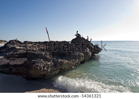 Pelicans are sitting on rocks in sea