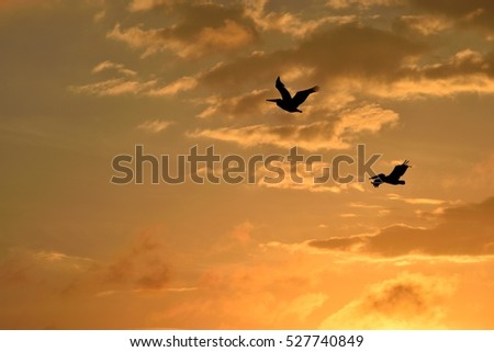 Pelicans flying over the river at sunset Florida, USA