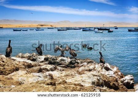 Pelicans on Peruvian coastline, Paracas National Reserve - stock photo