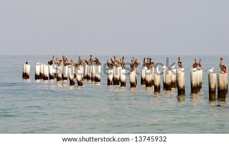 Pelicans perched on a coastal pier - stock photo