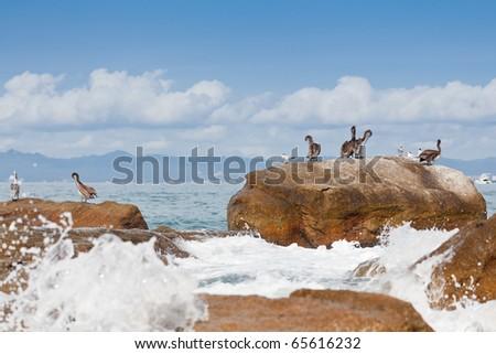 Pelicans resting on the rocks of Banderas Bay, Puerto Vallarta, Mexico - stock photo