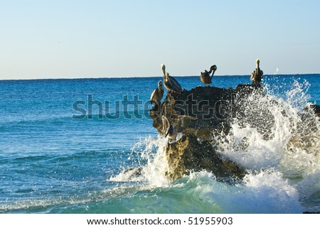 Pelicans sitting on a rock - stock photo