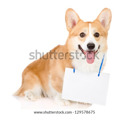 Pembroke Welsh Corgi dog with a blank banner hung on the neck. looking at camera