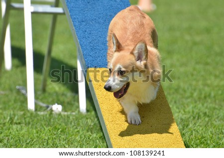 Pembroke Welsh Corgi on Dog Walk at a Dog Agility Trial - stock photo