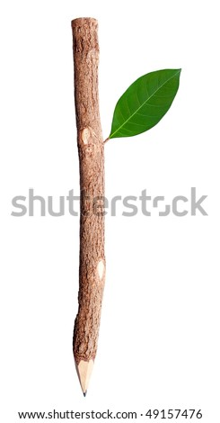 pencil and green leaf on a white background
