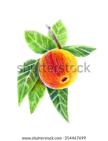 Pencil drawing an apple on a branch - stock photo
