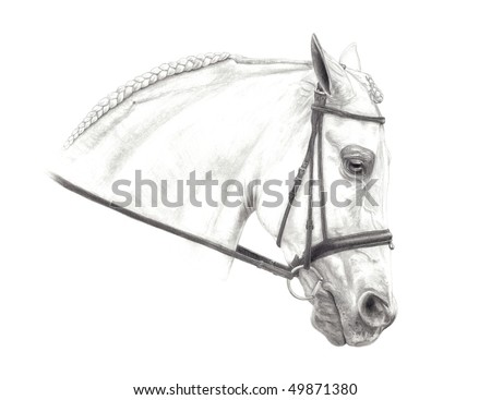 Horse Symbols Drawings Pencil Drawing of a Half