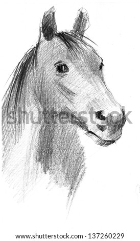 Pencil drawing of a head of black horse isolated - stock photo